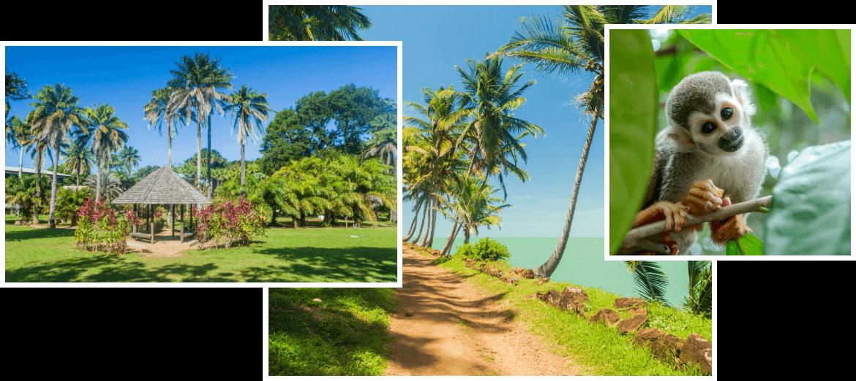 location de voiture Saint Laurent du Maroni - Payless Guyane